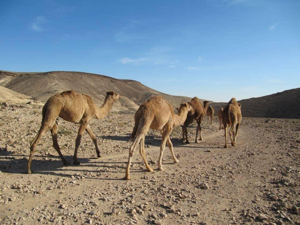walking the length of Israel