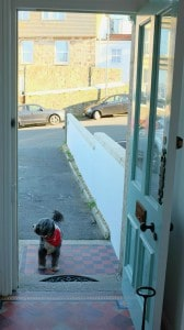 Cornwall Dog