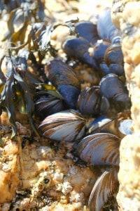 Cornwall shells