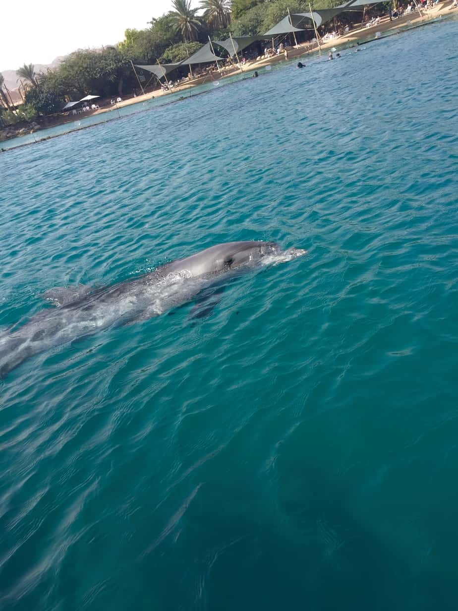 Dolphin saying hello at Dolphin Reef