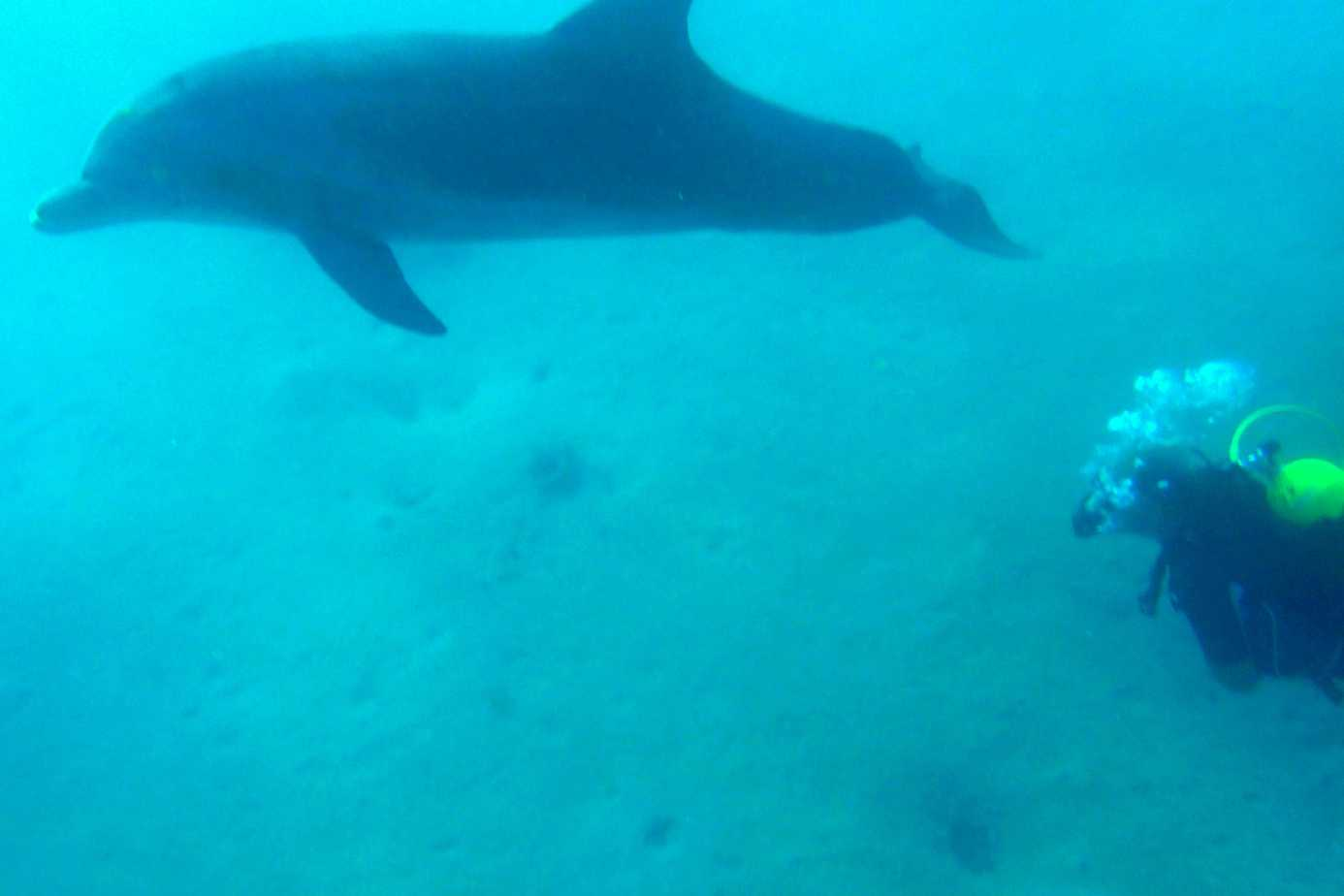 Swimming with Dolphins at Dolphin Reef