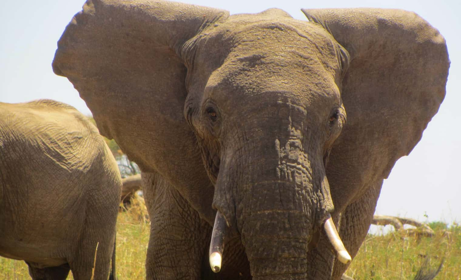 African safari guide