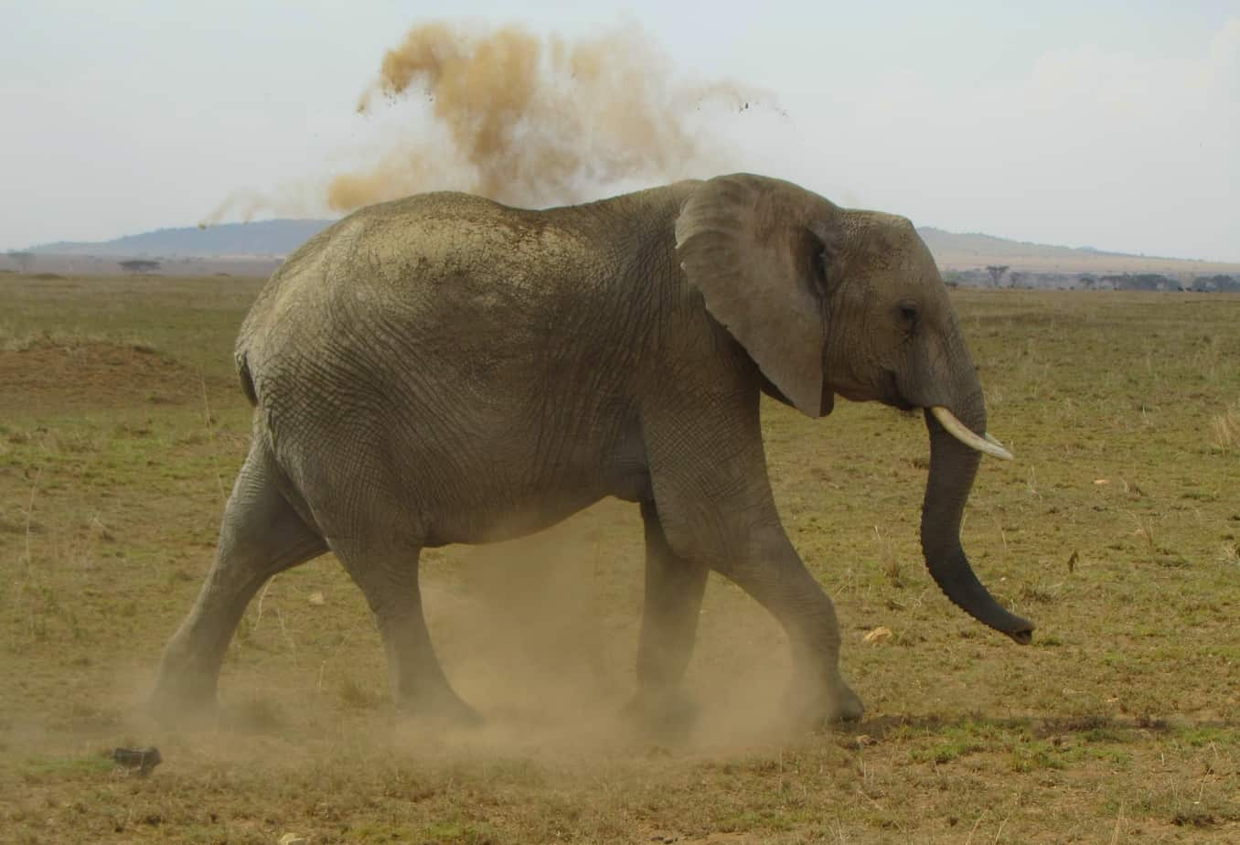 Elephant Passing
