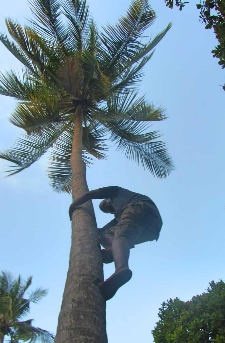 Mafia Island coconut beer