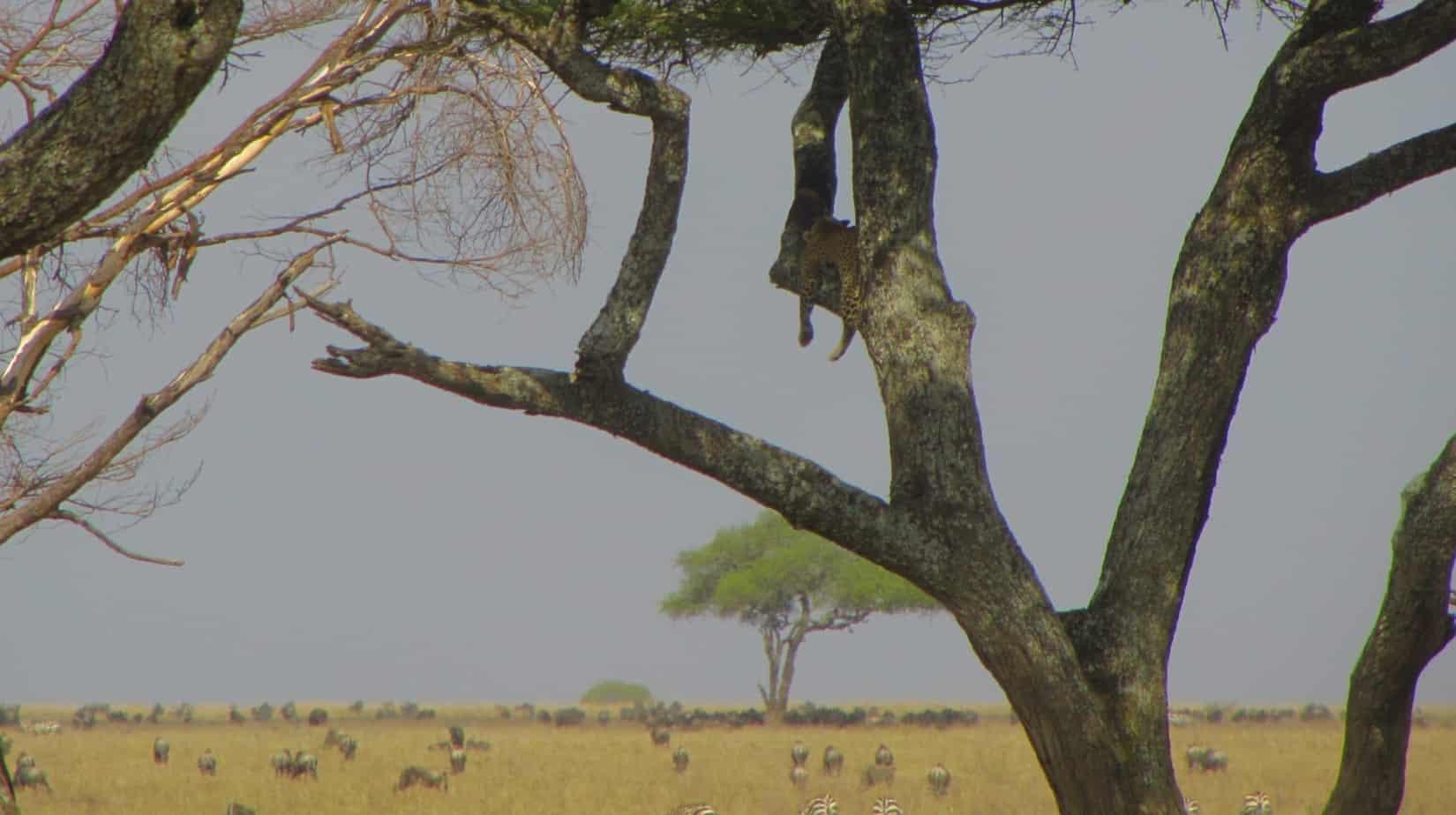Leopard View