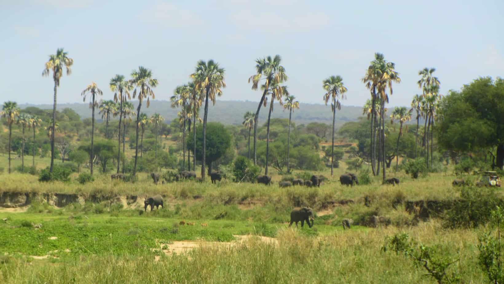 Tarangire Elephants