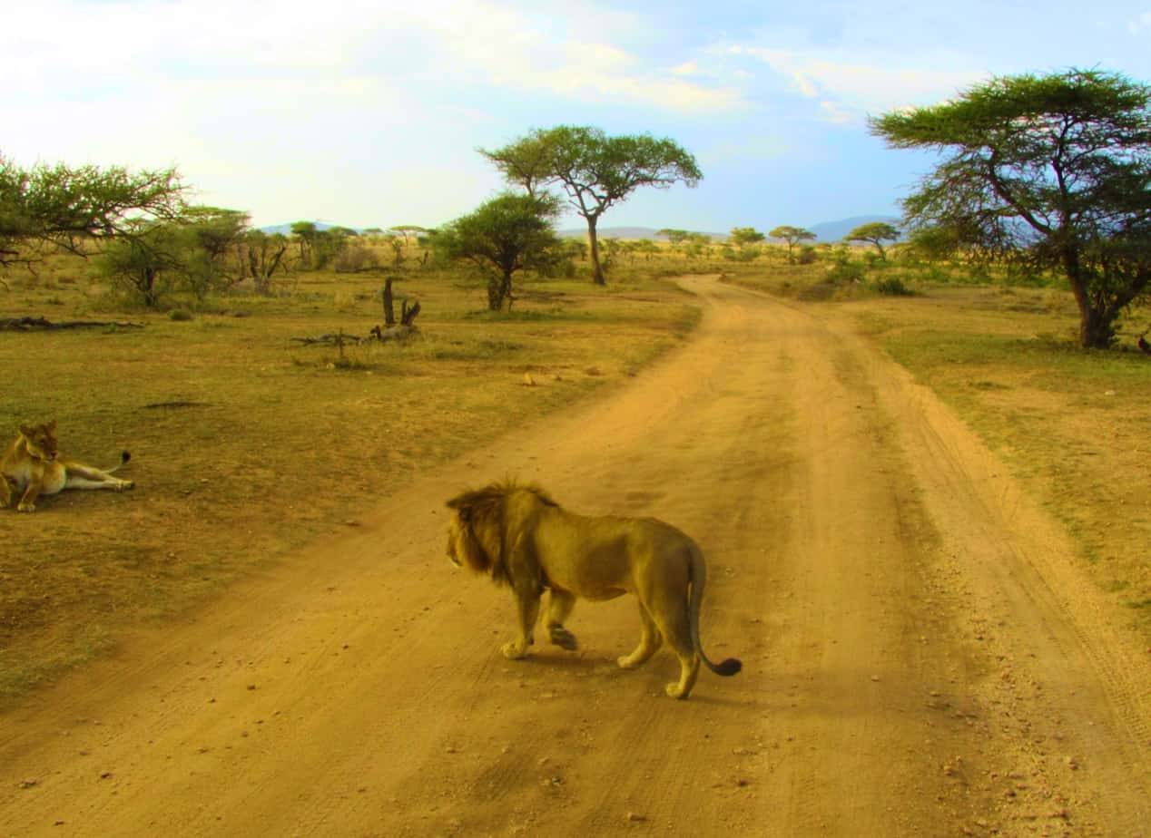 In photos: 15 highlights from my Tanzania safari
