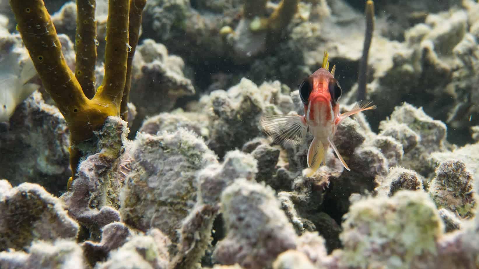 Diving with Utila Dive Centre
