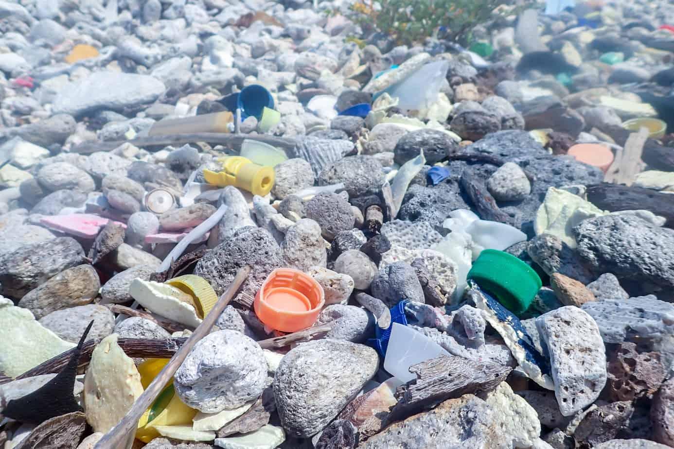 Utila Dive Centre beach clean up