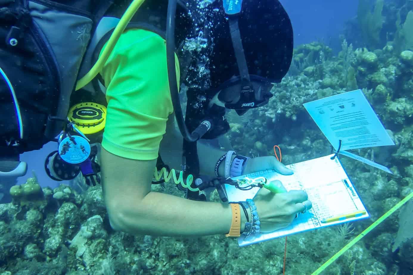 GoEco marine conservation training Utila Dive Centre