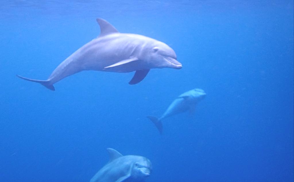 Dolphins on Mafia Island