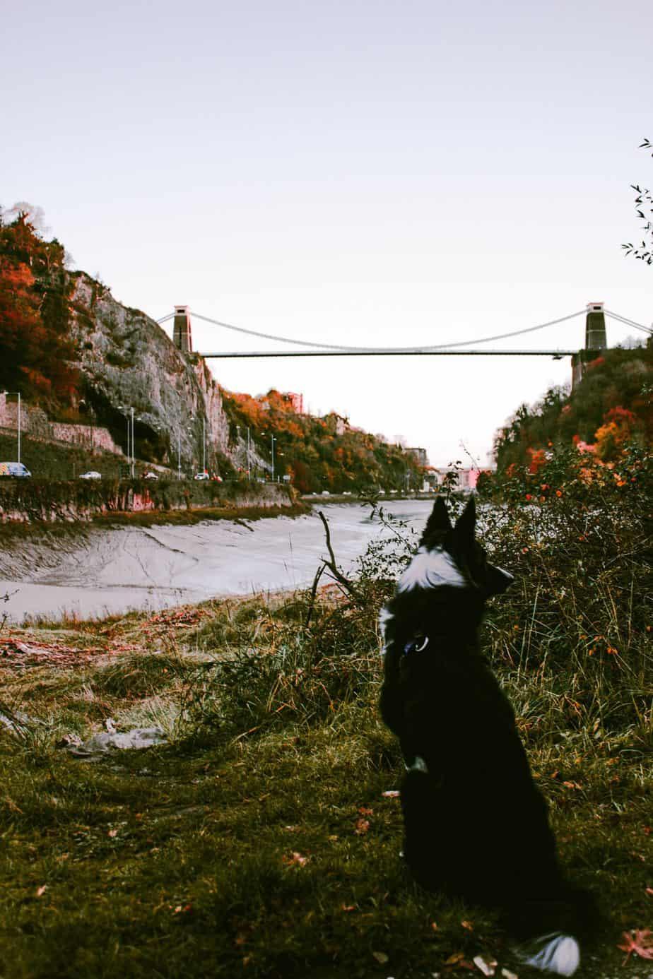 Dog walks Bristol